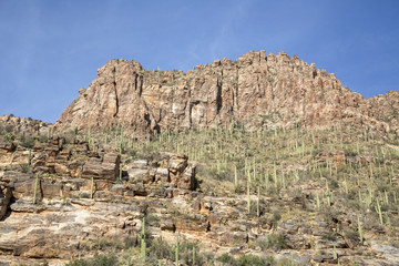 Saguaro Canyon
