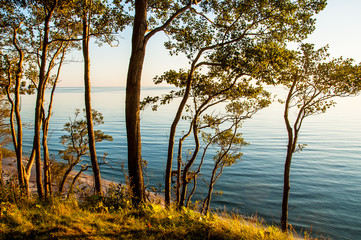 View forest Baltic sea
