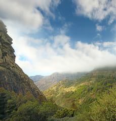Garajonay National Park, island La Gomera, Spain, Canary islands
