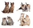 Cats or kittens pair set isolated