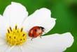 Obrazy na płótnie, fototapety, zdjęcia, fotoobrazy drukowane : Ladybug