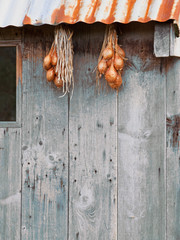 Shallots hung out to dry