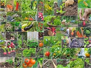 """planche photos """"légumes du potager"""""""