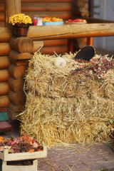 on a farm near the wooden house haystack, flowers, sunflower and