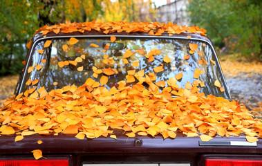Fallen leaves on a car