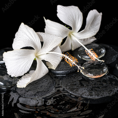 Beautiful cryogenic spa concept of delicate white hibiscus, zen