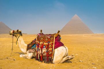 Relax in desert