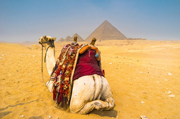 The view with a camel