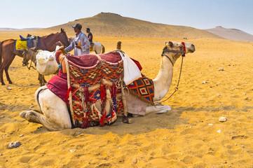 The comfort in desert