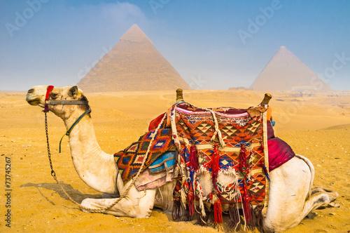 Foto op Plexiglas Kameel Welcome to Giza