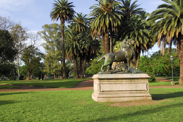 Lion at Bosques de Palermo