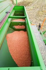 Getreidebau, Sämaschine mit  Korn im Getreidetank