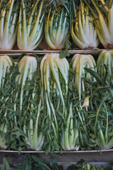 Celery vegetable