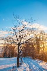 amazing sunshine at winter seasone