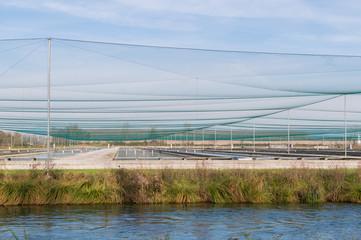 Breeding of fish farms,trout
