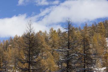 Valle Maira - Elva