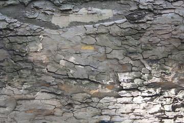 Textured Bark Detail