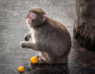 Мартышка monkey