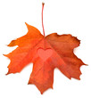 Yellow leaf with a heart