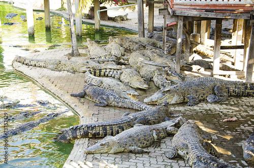 Foto op Plexiglas Krokodil Big crocodile in the zoo