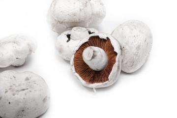 monocrom mushrooms