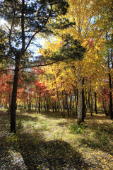Autumn landscape - mixed forest