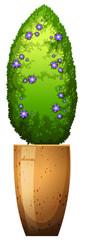 A houseplant