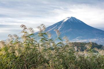 河口湖畔の富士山とアシ