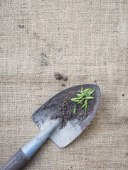 Gardening tools with seed and soil