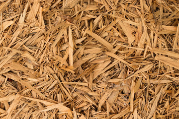 Clean Wood Shavings