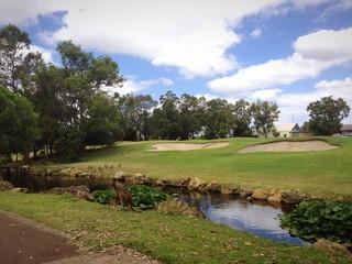 kangaroo in a golf course
