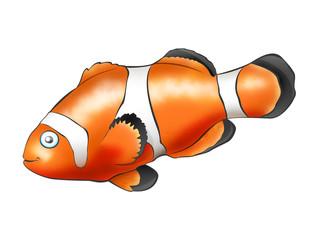 Fish - Clown