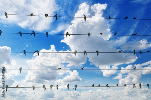 flock of swallows on blue sky background - 73767676