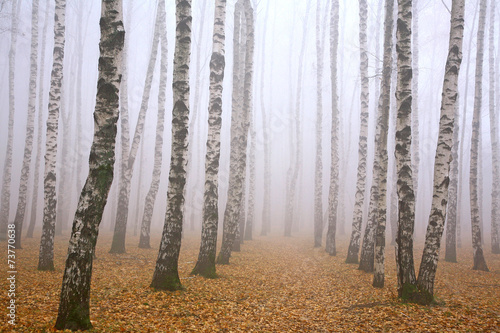 Pathway in mist birch grove © Elena Kovaleva