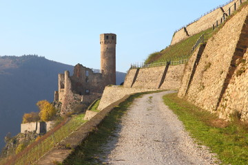 Burg Ehrenfels am Rhein (November 2014)
