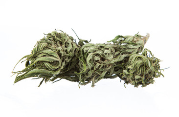 Cannabis dried plant, marijuana