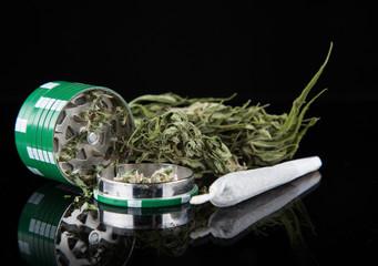 Dried cannabis plant, marijuana