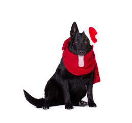 black shepherd in santa  clothing