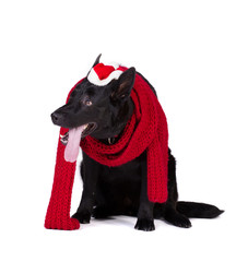 black dog in santa  clothing