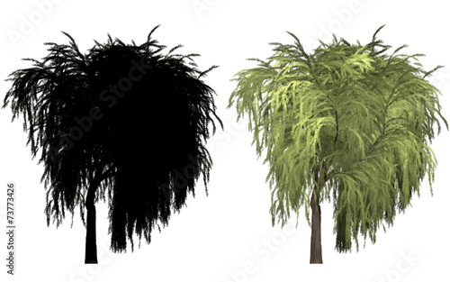 canvas print picture Weide willow