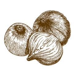 vector illustration of three onions