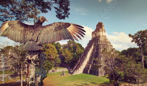 Neophron looking at the ancient ruins of Mayan city Tikal - 73775029