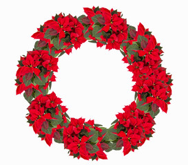Christmas wreath from poinsettia isolated on white
