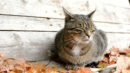 Frightened cat in autumn leaves