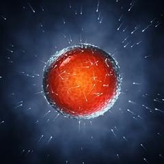 Spermatozoa fertilizing an ovum , Insemination