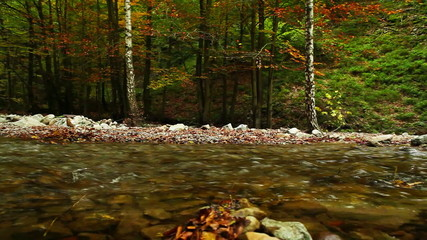 Mountain river in the autumn with Hunter beagle dog HD footage