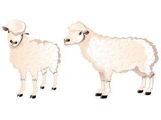 Sheep Character