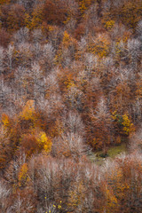 Autumn in the National Park of Abruzzo in Italy