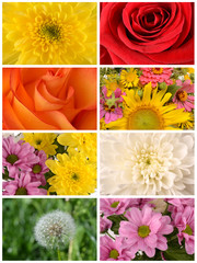 Collection of flowers closeup