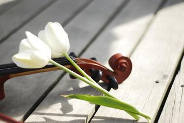 Lale ile keman - Violin with tulips